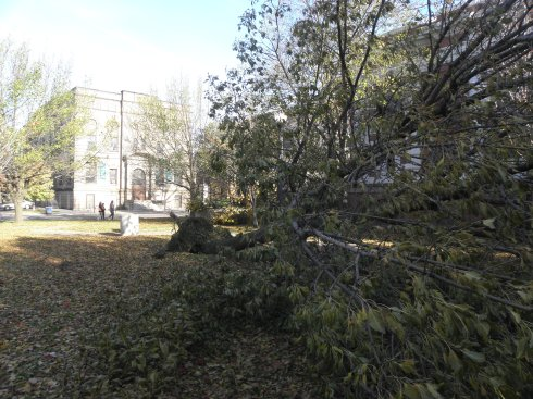 Downed tree west of Carnegie West Library