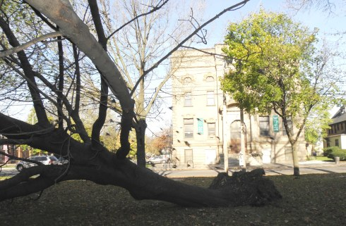 Downed tree north of Carnegie West Library